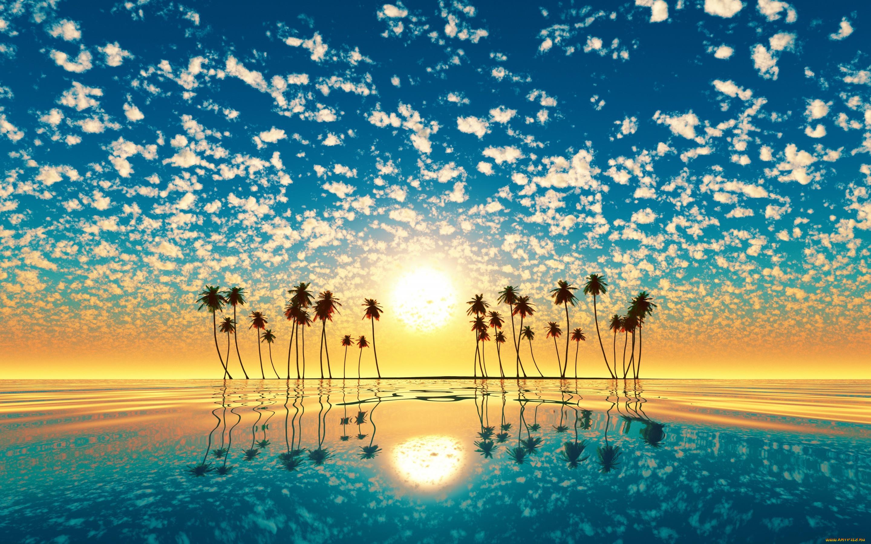 образом картинки о солнце пляже и пальмах установке фотореле